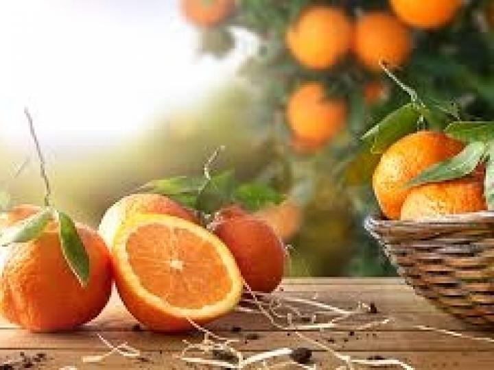 Conab lança edital para incentivar o escoamento de 20 mil t de laranja no Sul