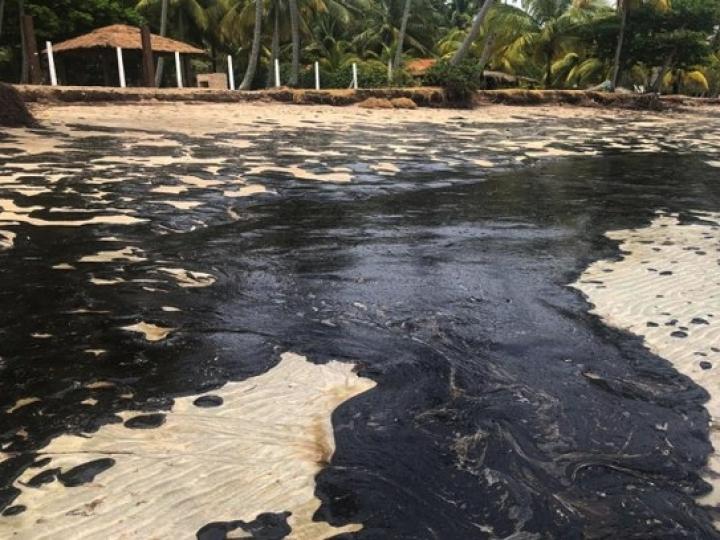Medidas adicionais para monitorar pescado de área afetada por vazamento de óleo