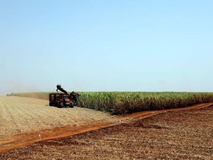 Clima favorável permite avanço da moagem no Centro-Sul