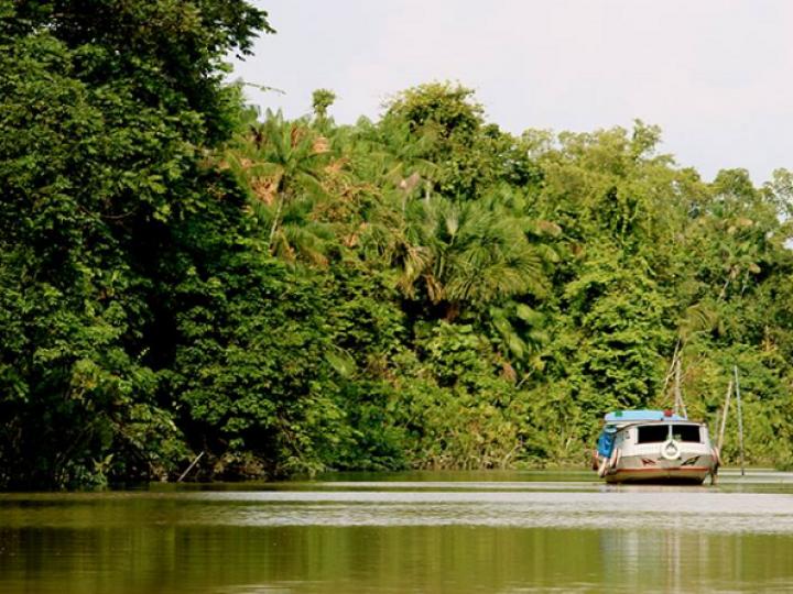 Quão bem os agricultores familiares podem viver na Amazônia
