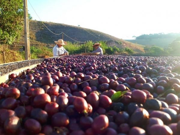 Foto: Farmly Divulgação