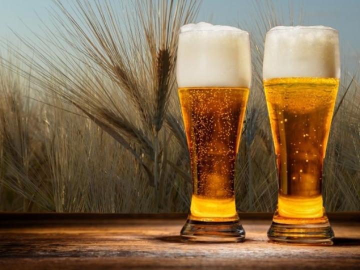 Câmara setorial para a cadeia da cerveja
