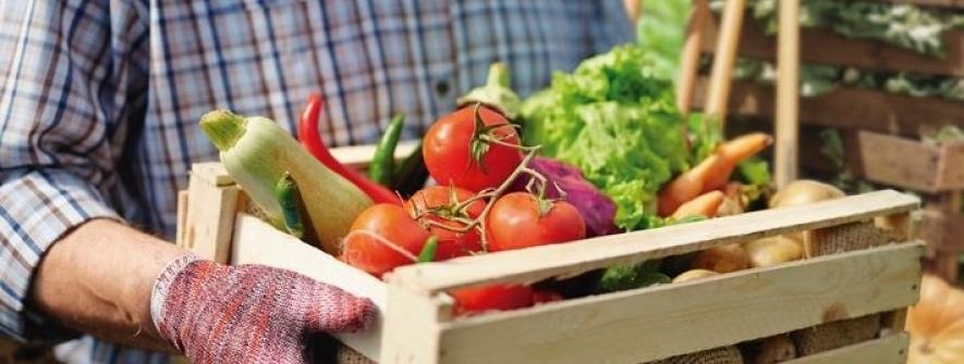 Agricultura familiar movimenta a economia e preserva o meio ambiente