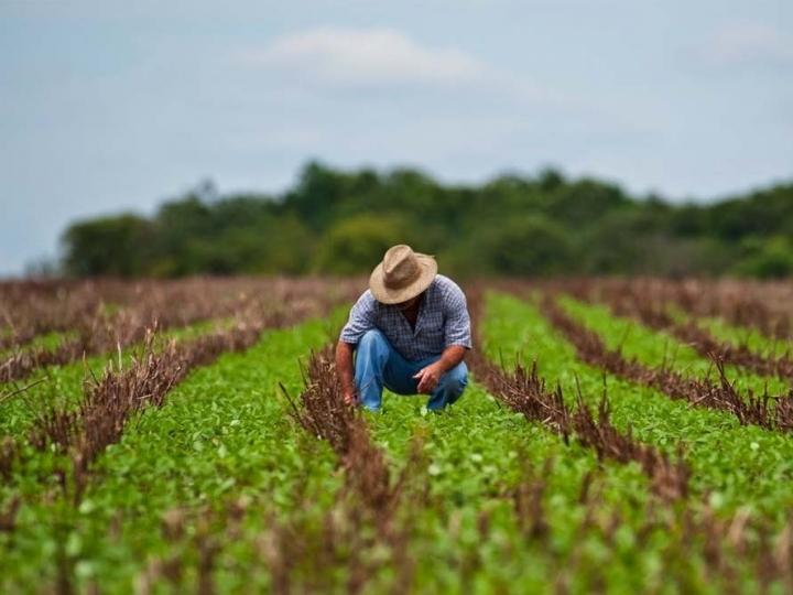 AgroNordeste vai ajudar a reduzir as diferenças regionais na agricultura