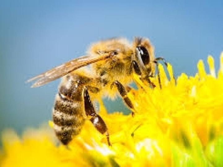 Ações de apoio à apicultura e meliponicultura