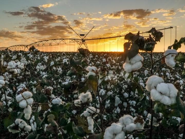 Irrigação transforma lavoura de algodão no Mato Grosso