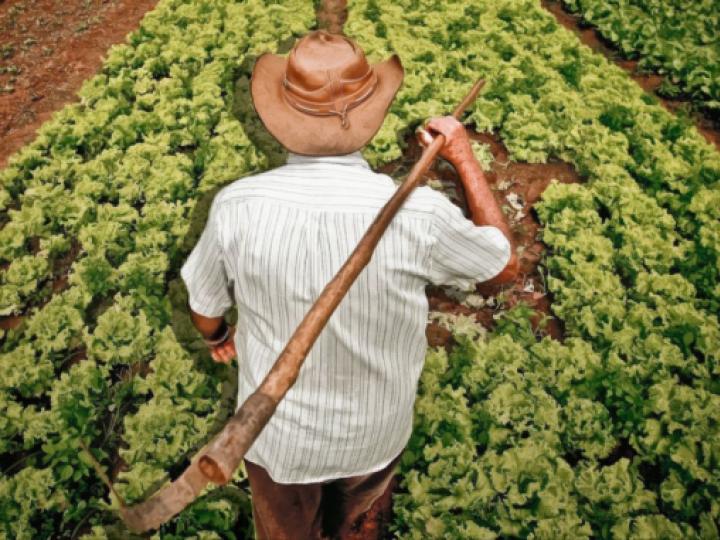 Agricultores familiares da BA, PB e de MG vão receber Garantia-Safra