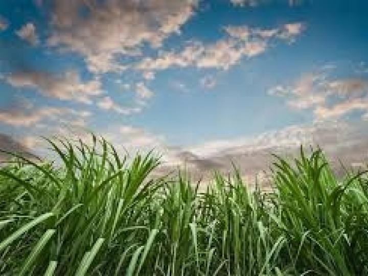 Biosev atinge 1 bilhão no EBITDA ajustado, aumento de 32,5%