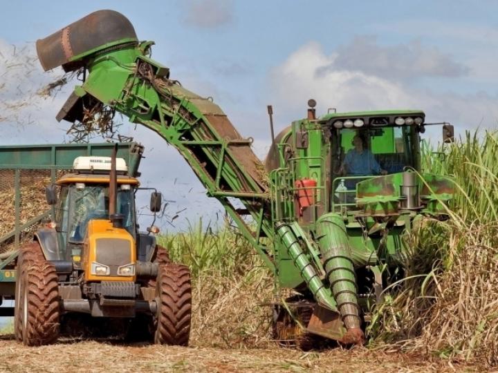Quinzena alcooleira tem mais de 70% da cana destinada ao etanol
