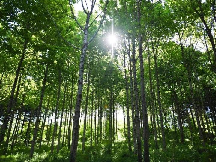 Máquina de plantar florestas é esperança ante dados sobre desmatamento