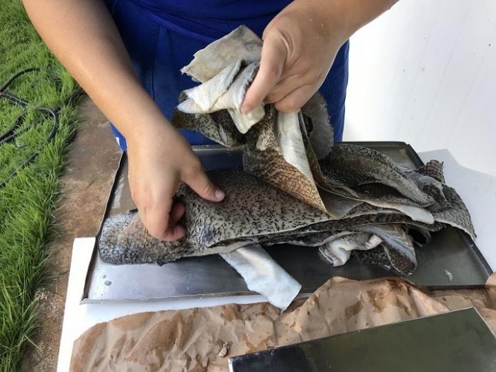 Curso mostra como curtir pele de peixe