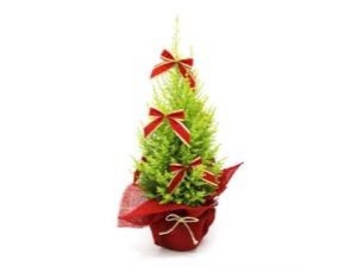 Procura por árvores de Natal naturais cresce cerca de 15%