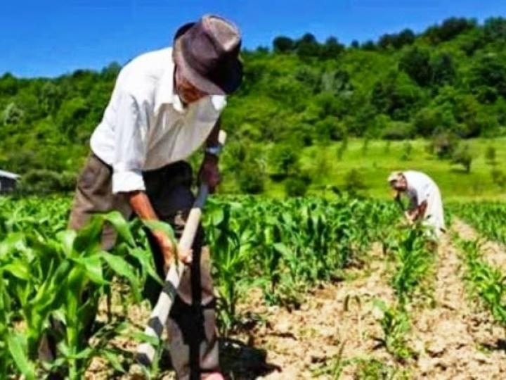 Capacitações de agricultores familiares em 2020