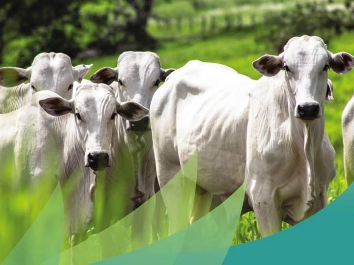 US$ 200 milhões para a Defesa Agropecuária