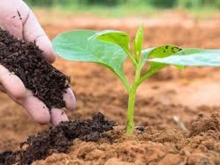 Abisolo estima expansão de 12% nas vendas de fertilizantes