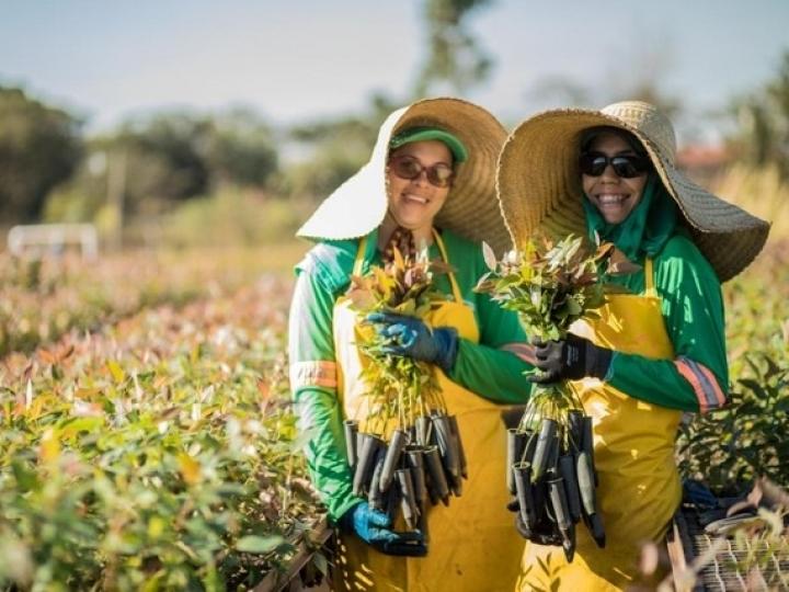 Eldorado Brasil abre vagas para MS e SP