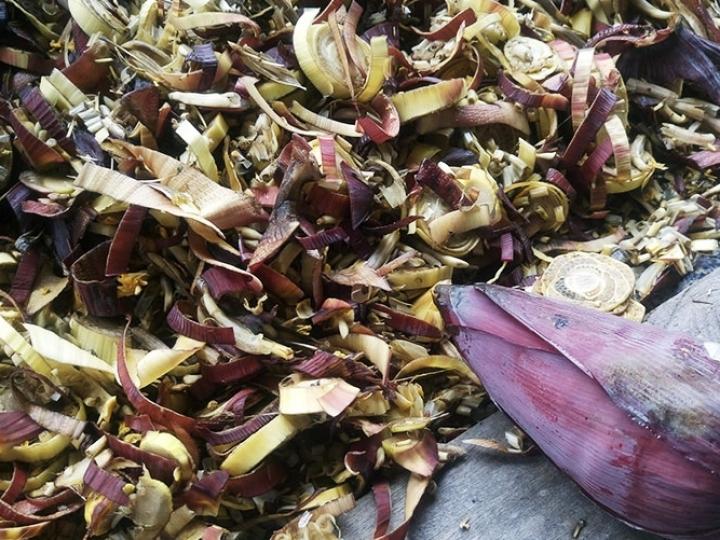 Biomassa: Resíduos da bananeira em prato biodegradável