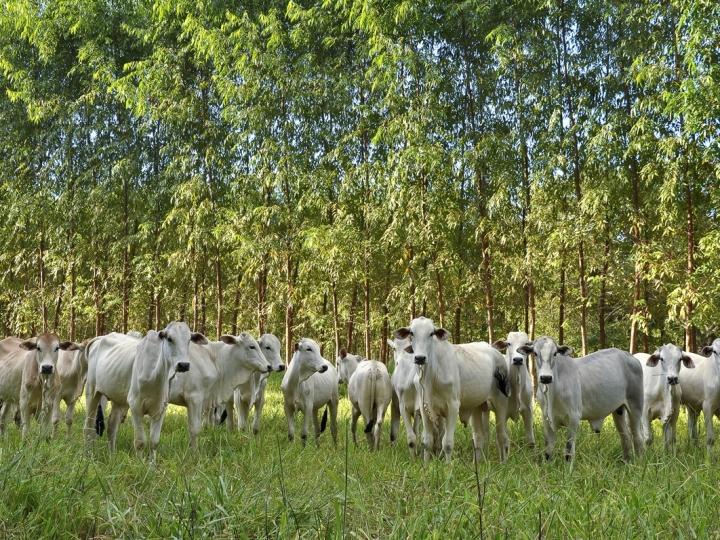 Brasil e Alemanha: 40 milhões de euros para agropecuária sustentável