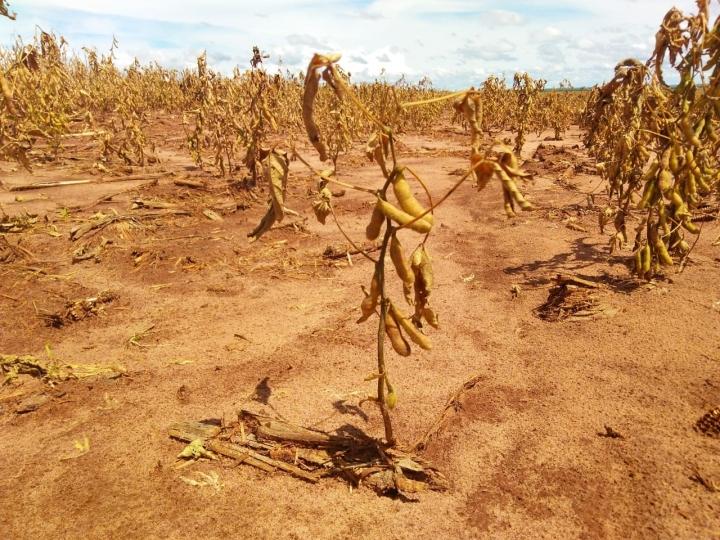 Técnicos do Mapa irão verificar condições das lavouras do RS afetadas pela seca