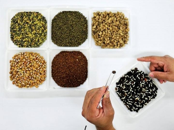 Brasil enviará remessa de sementes para o Banco Mundial de Sementes de Svalbard