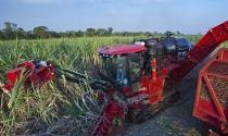 Case IH lidera venda de colhedoras de cana-de-açúcar