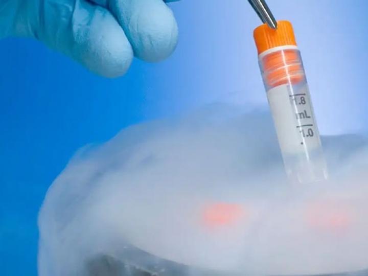 Núcleo genético de doadoras e lança linha premium de embriões