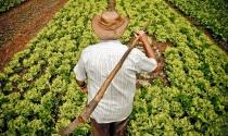 A situação e os desafios do pequeno agricultor no Brasil