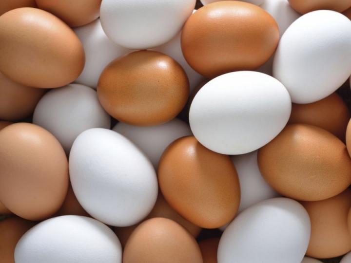 Ovos de galinhas livres de antibióticos