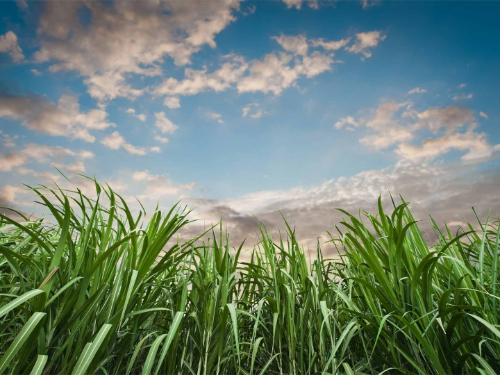 Biosev atinge 1,4 bilhão no EBITDA ajustado