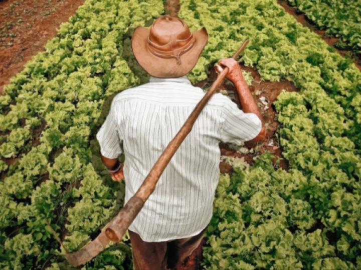 Agricultores familiares receberão benefício do Garantia-Safra em março