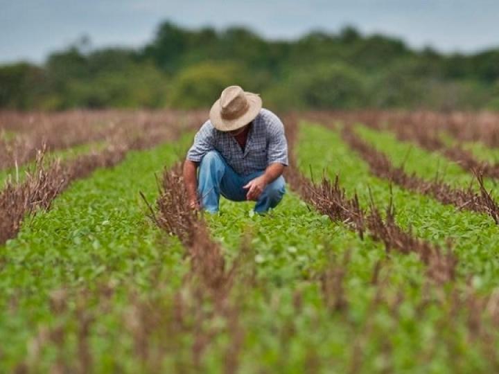Ministra destaca compromisso dos produtores rurais e tranquiliza sobre abastecimento