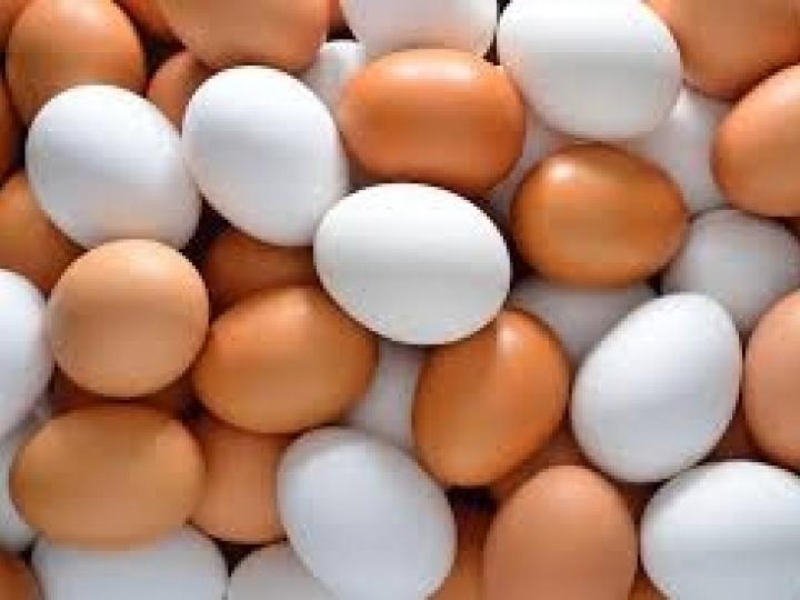 Marca Tecnologia Embrapa chega às gondolas dos supermercados em ovos da Korin