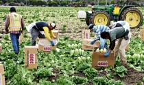 Produtores rurais são prejudicados devido cortes
