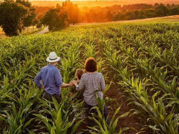Garantia-Safra antecipa o benefício para agricultores familiares de R$ 73,3mi em abril