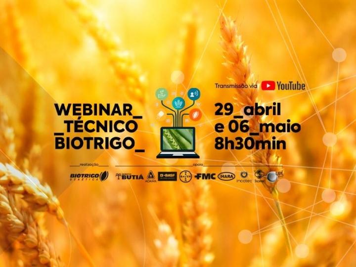 Planejamento da safra de trigo 2020 é tema de webinar gratuito