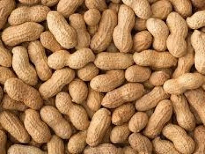 Safra histórica de amendoim aumenta confiança mesmo em cenário de crise
