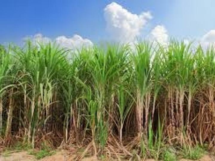 Câmbio e pequena redução de área cultivada provocam leve queda no mercado de defensivos agrícolas