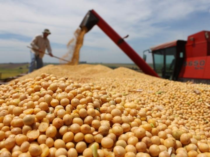 Brasil colhe 123,5 milhões de toneladas de soja