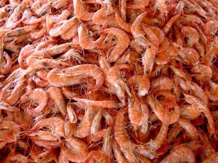 Brasil vai exportar camarão para a Coreia do Sul