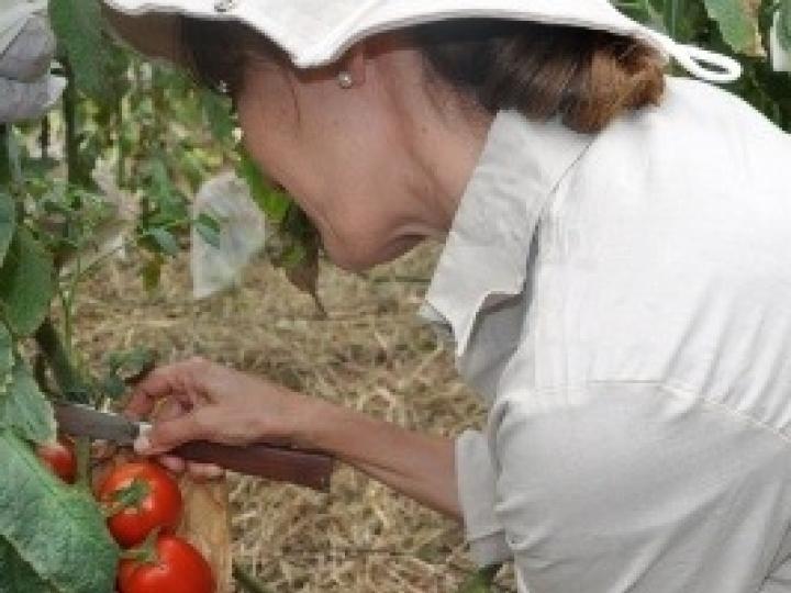 Syngenta endossa o pioneirismo de seu pipeline e apresenta novas tecnologias para proteção de cultivos e tratamento de sementes