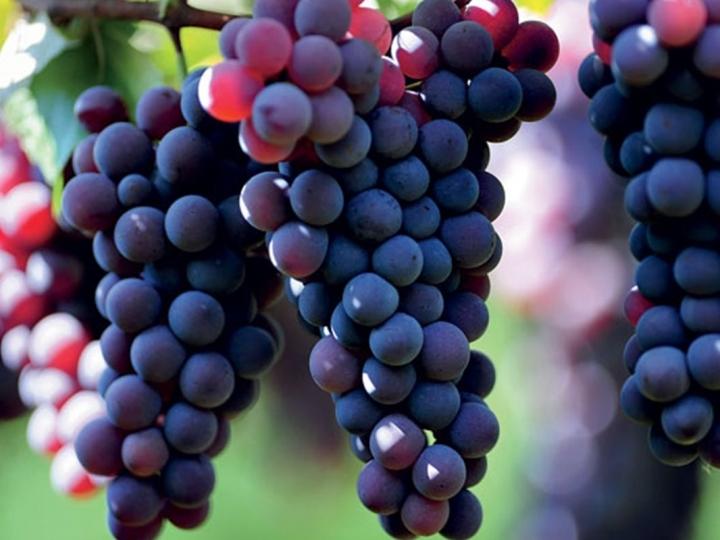 Consulta pública sobre revisão de normas para bebidas, vinhos e derivados da uva é prorrogada por 60 dias