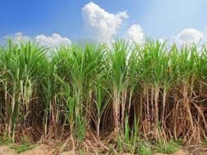 Queda no faturamento com etanol