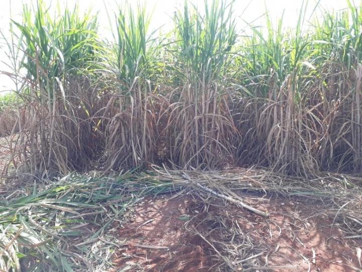Fertilizante favorece produtividade de agricultor