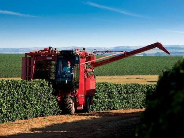 25% dos cafeicultores realizam colheita mecanizada