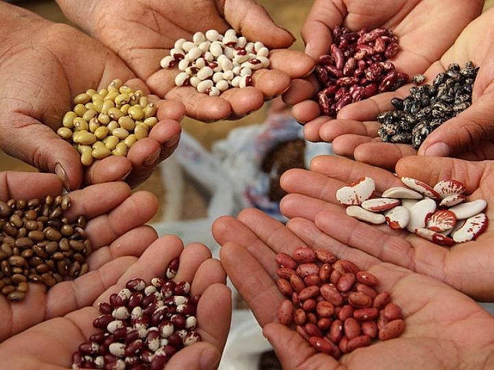 Portfólio de sementes é o novo destaque do aplicativo BASF Agro