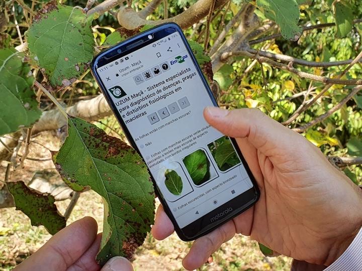 Software auxilia diagnóstico virtual de problemas no cultivo de maçã, morango e pêssego