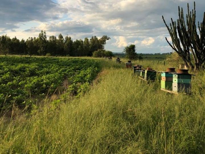 Colmeia Viva aprimora Assistência e caem mortalidade de abelhas