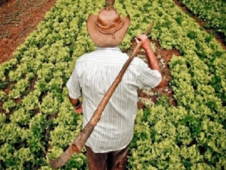 Agricultor: Consulta online do Programa Garantia-Safra