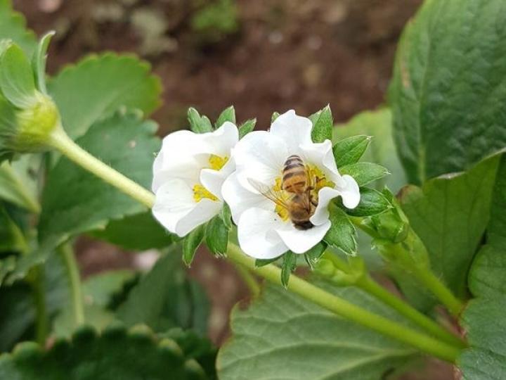 Dia da Abelha:  ganho na relação entre agricultura e apicultura