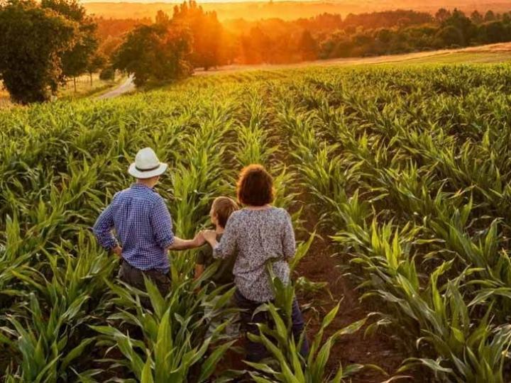 Agricultores familiares têm novo canal para comunicar perdas de alimentos